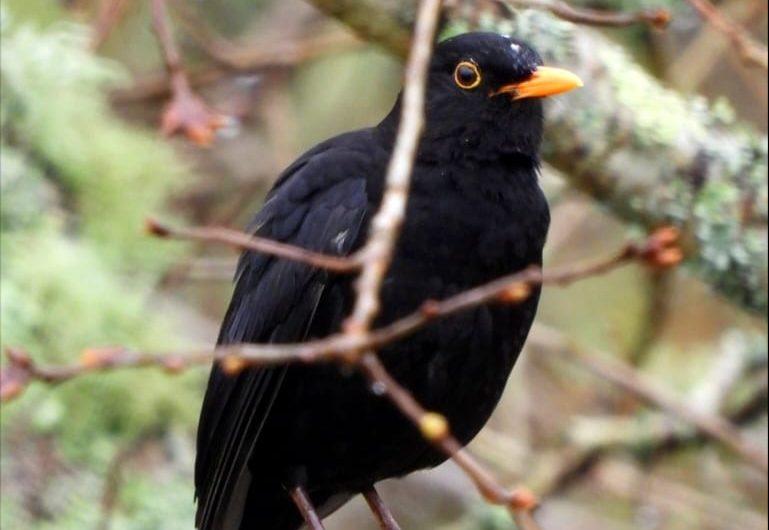 Fica na casa con ADEGA Observando Aves